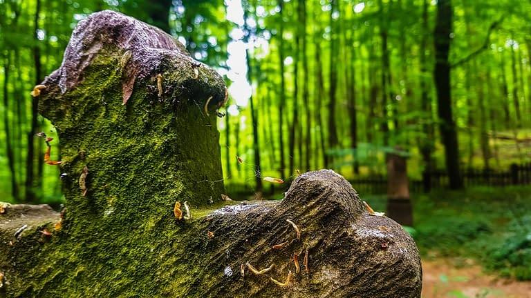 zuppa körtvélyesi erdei temető (9)