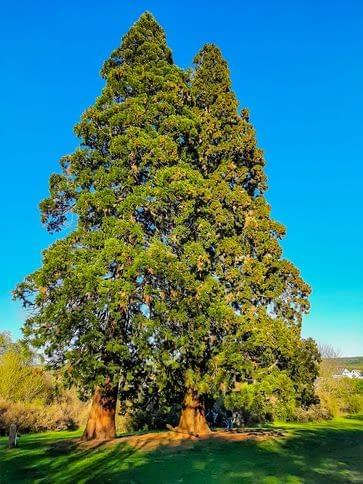 fák-2-honlapméretű